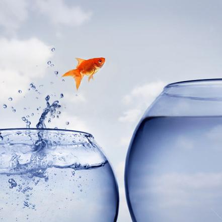goldfish-jump